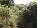 Carnstabba Hill - St Ives - Cornwall - Pathway Up the Hill
