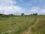 St Ives - Hellesveor - Field Path